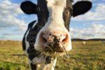 Сільгоспвиробництво важко уявити без тваринницької галузі