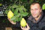 Фермер з Волині вирощує екзотичні цитрусові
