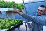 Молоде подружжя з Тернопільщини вирощує зелень та їстівні квіти без ґрунту