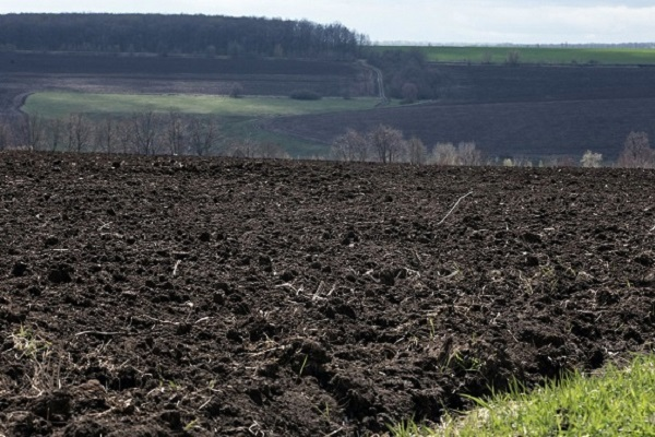 Закарпатських фермерів штрафуватимуть за бур'яни