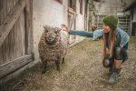 Вівці в офісі: американська компанія найняла тварин на роботу