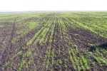 На Тернопільщині 70 процентів озимих посівів перебуває у доброму стані