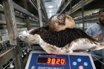 На фермі під Києвом виростили гриб-рекордсмен