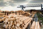 Стало відомо скільки мільярдів Україна заробила на деревині