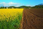 Земля в Україні має продаватися по $10 тис. за гектар – Тарас Дзьоба