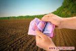 Скільки коштує земля в Україні: з кожним роком все дешевше