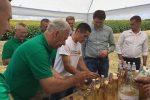 Європейцям засмакував мед на Тернопільщині