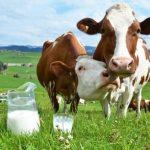 В Україні скоротилося промислове виробництво молока