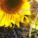 В Україні обвалилася ціна на соняшникову олію