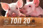 Найбільші свиноферми України — рейтинг господарств