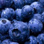 Названо найкращі сорти лохини для вирощування в Україні