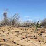 Україна може залишитися без урожаю: народний синоптик прогнозує небувалу посуху