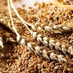 В Україні знову дорожчають зернові