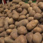 Експерт прогнозує зростання цін на картоплю