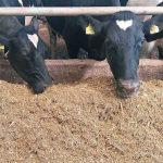 В Україні зросла вартість кормів для тварин