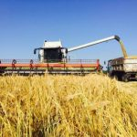 В Україні намолотили більше 52 мільйонів тонн зерна